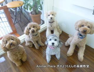 犬のようちえん高槻教室20120122