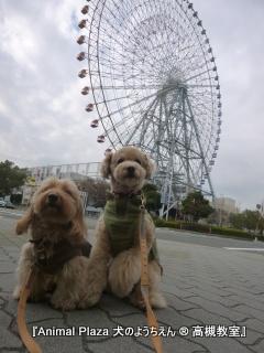犬のようちえん高槻教室20140120 (4)