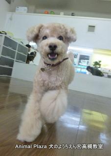 犬のようちえん高槻教室20140120