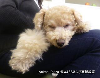 犬のようちえん高槻教室20140207 (8)