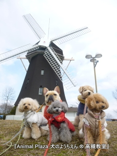 大きな風車に「ここはオランダ!?」