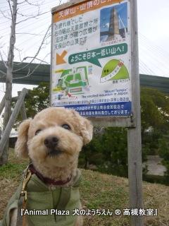 日本一低い山、天保山♪