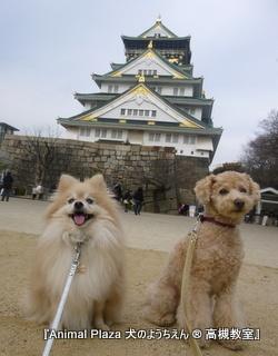 戦国時代に心を馳せて大阪城♪