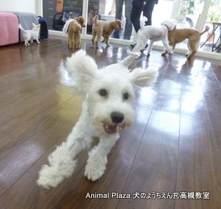 犬のようちえん高槻教室20140511. (2)