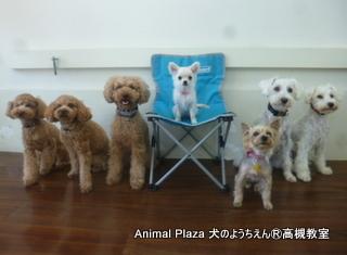 犬のようちえん高槻教室20140511 (3)