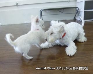 犬のようちえん高槻教室20140511.