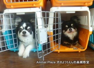 犬のようちえん高槻教室20140518 (11)
