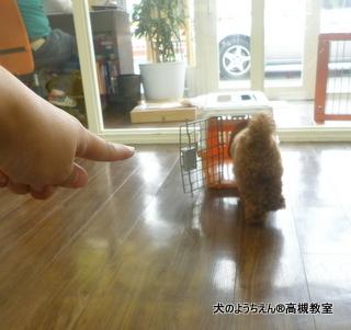 犬のようちえん高槻教室20140518 (12)