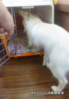 犬のようちえん高槻教室20140518 (3)