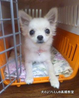 犬のようちえん高槻教室20140518 (4)