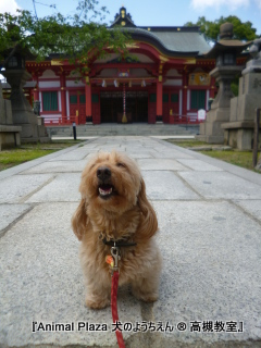 犬のようちえん高槻教室20140521 (2)