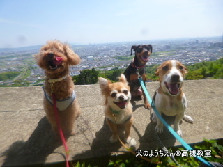 犬のようちえん高槻教室20140524 (10)