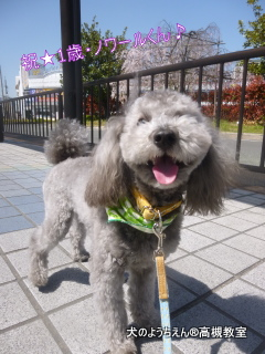 犬のようちえん高槻教室®5月バースデイ (1)