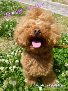 犬のようちえん高槻教室®5月バースデイ (2)