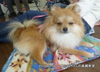 犬のようちえん高槻教室★20140501 (2)