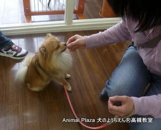 犬のようちえん高槻教室★20140501 (3)