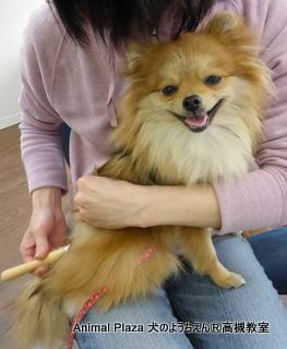 犬のようちえん高槻教室★20140501 (5)