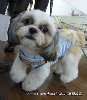 犬のようちえん高槻教室★20140501