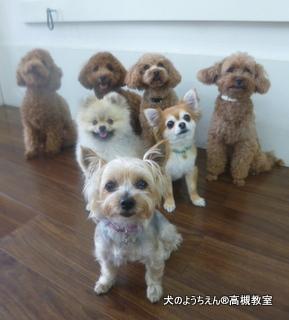 犬のようちえん高槻教室★20140531 (7)
