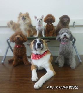 犬のようちえん高槻教室★20140531 (9)