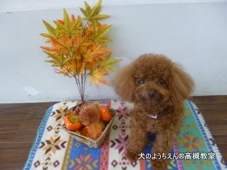 犬のようちえん高槻教室20140907 (2)