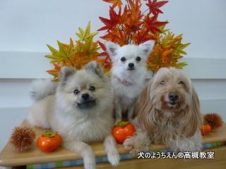 犬のようちえん高槻教室20140907 (5)