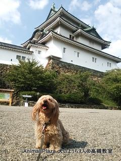 こぶりで可愛い和歌山城♪