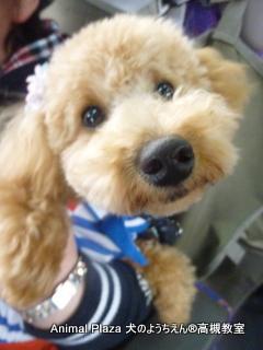 犬のようちえん高槻教室20150408 (12)