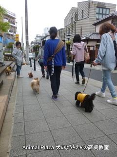 犬のようちえん高槻教室20150408 (4)