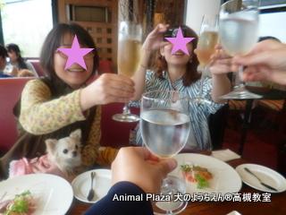 犬のようちえん高槻教室20150408 (6)