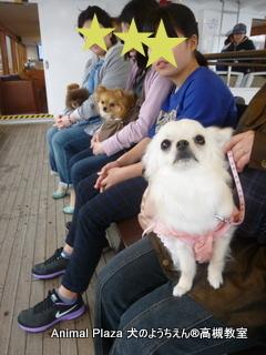 犬のようちえん高槻教室20150408 (7)