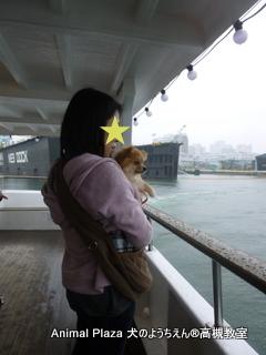 犬のようちえん高槻教室20150408 (8)