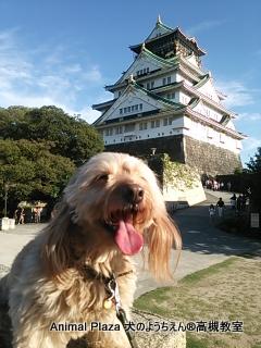 そして、もちろん大阪城♪