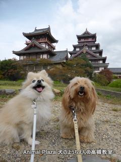 伏見桃山城♪ 、、、本物じゃないけど♪