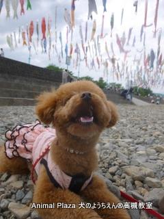 犬のようちえん高槻教室★マルお泊り (1)