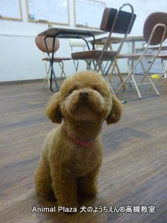 犬のようちえん高槻教室★マルお泊り (2)