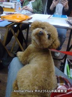 犬のようちえん高槻教室★マルお泊り (4)