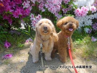 犬のようちえん高槻教室★マルお泊り (6)