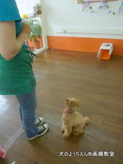犬のようちえん高槻教室20140716 (5)