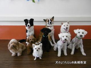 犬のようちえん高槻教室20140716 (9)