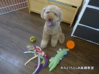 犬のようちえん高槻教室20150716 (1)