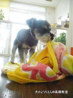 犬のようちえん高槻教室20150716 (6)