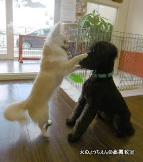 犬のようちえん高槻教室20150716 (8)