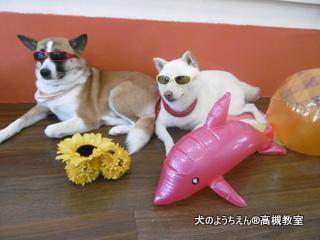 犬のようちえん高槻教室20150716 (9)