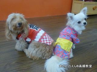 犬のようちえん高槻教室★20150726 (11)