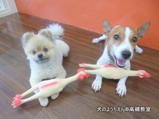 犬のようちえん高槻教室★20150726 (15)