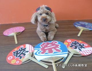 犬のようちえん高槻教室★20150726 (3)