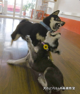 犬のようちえん高槻教室★20150726 (4)