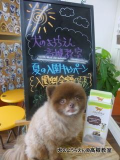 犬のようちえん高槻教室★20150726 (6)