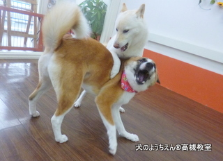 犬のようちえん高槻教室★20150726 (7)